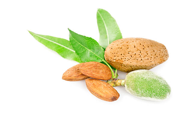 Freshness almonds stock photo