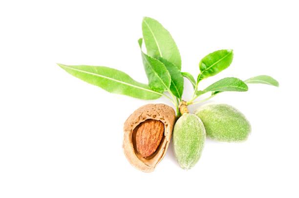Freshness almonds stock photo