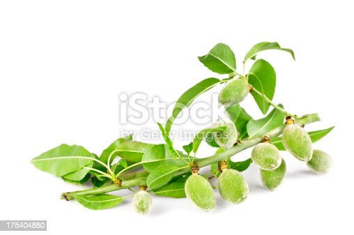 Freshness almond branch isolated on white