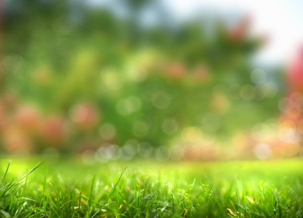 freshness in green garden stock photo