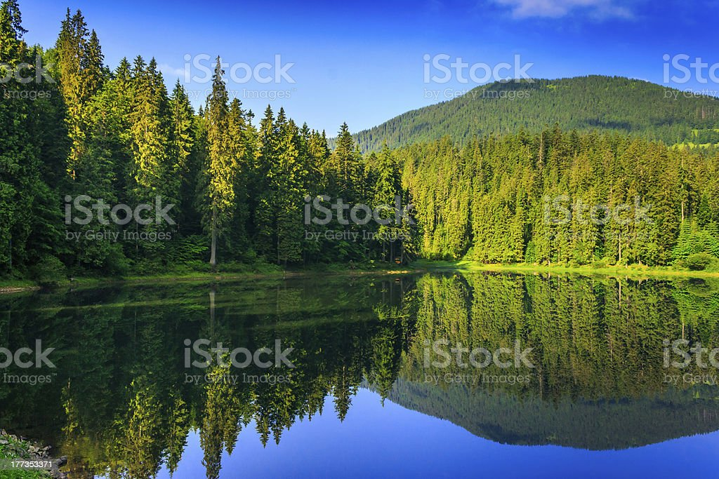 freshness near forest royalty-free stock photo