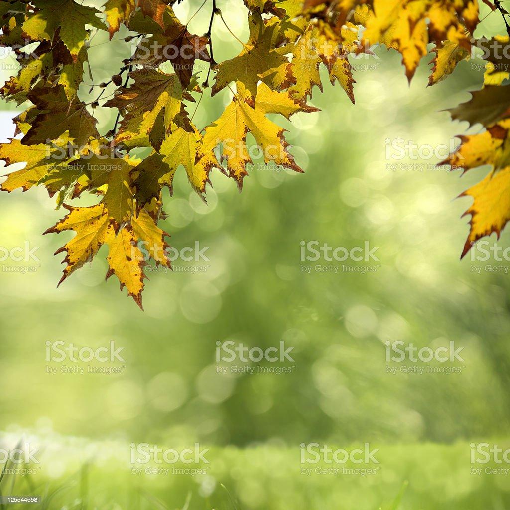 freshness of garden royalty-free stock photo