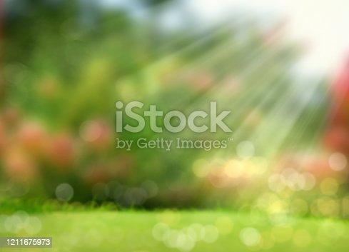 background image of blurry green garden landscape with sunbeam