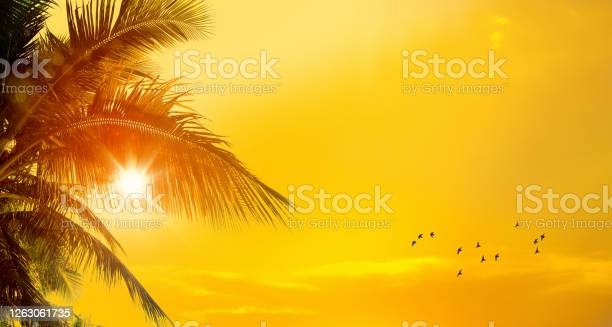 Photo of Freshness of tropical beach sunset