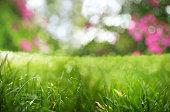 close up shot of green grass garden.