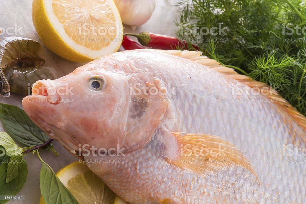 Freshness reddens the Nile Tilapia fish (Oreochromis niloticus) royalty-free stock photo