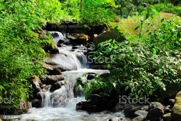 Photo of freshness small waterfall between the plant