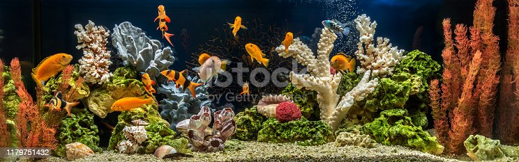 Freshwater aquarium with cichlids as pseudo-sea. Aquascape and aquadesign of aquarium