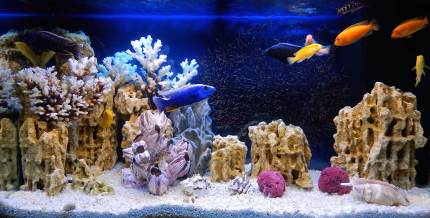 Freshwater aquarium decorated in a pseudo-marine style Freshwater aquarium decorated in a pseudo-sea style. Aquascape and aquadesign of aquarium aquarium stock pictures, royalty-free photos & images
