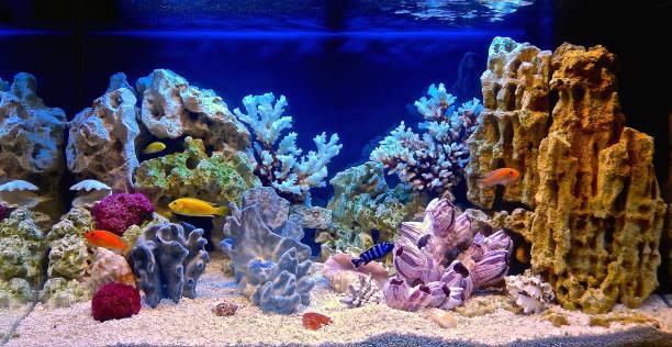 Freshwater aquarium decorated in a pseudo-marine style Freshwater aquarium decorated in a pseudo-sea style. Aquascape and aquadesign of aquarium animal captivity building stock pictures, royalty-free photos & images