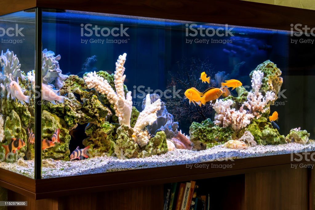 Freshwater Aquarium In Pseudosea Style Aquascape And Aquadesign Of Aquarium Stock Photo Download Image Now Istock