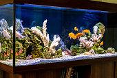 Freshwater aquarium with cichlids in style - pseudo-sea. Aquascape and aquadesign of aquarium