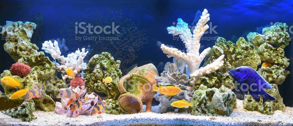 Aquário de água doce em estilo pseudo mar - foto de acervo