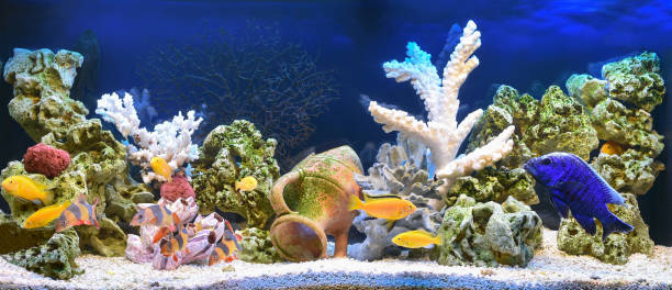 freshwater aquarium in pseudo-sea style - home aquarium stock pictures, royalty-free photos & images