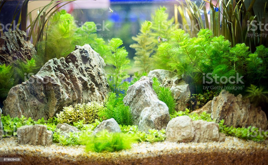 freshwater aquarium with green beautiful planted tropical – zdjęcie