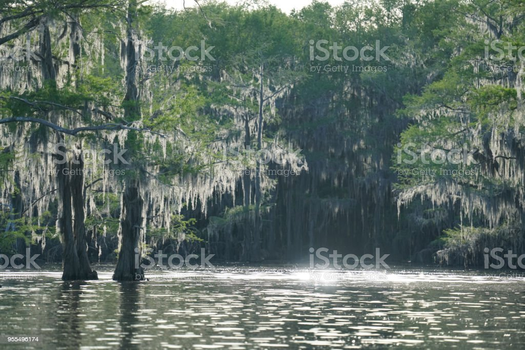 Freshwater Environment - Late Spring stock photo