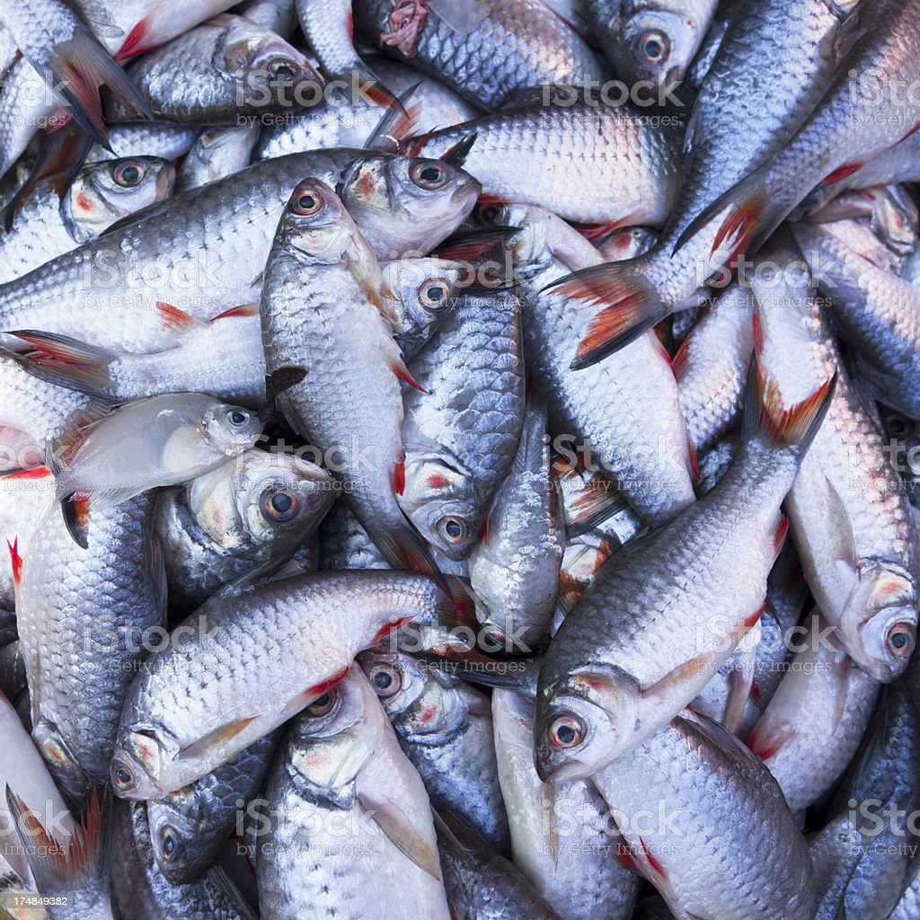 Freshwater fish for sale at a traditional Thai market. royalty-free stock photo
