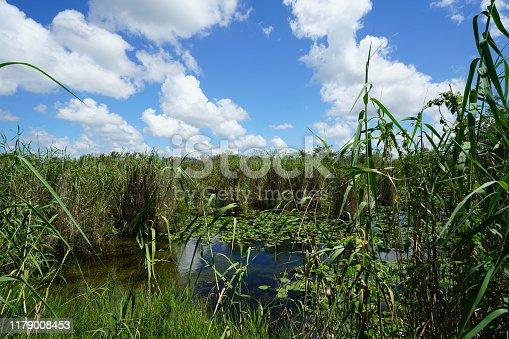 Freshwater Habitat - Everglades National Park