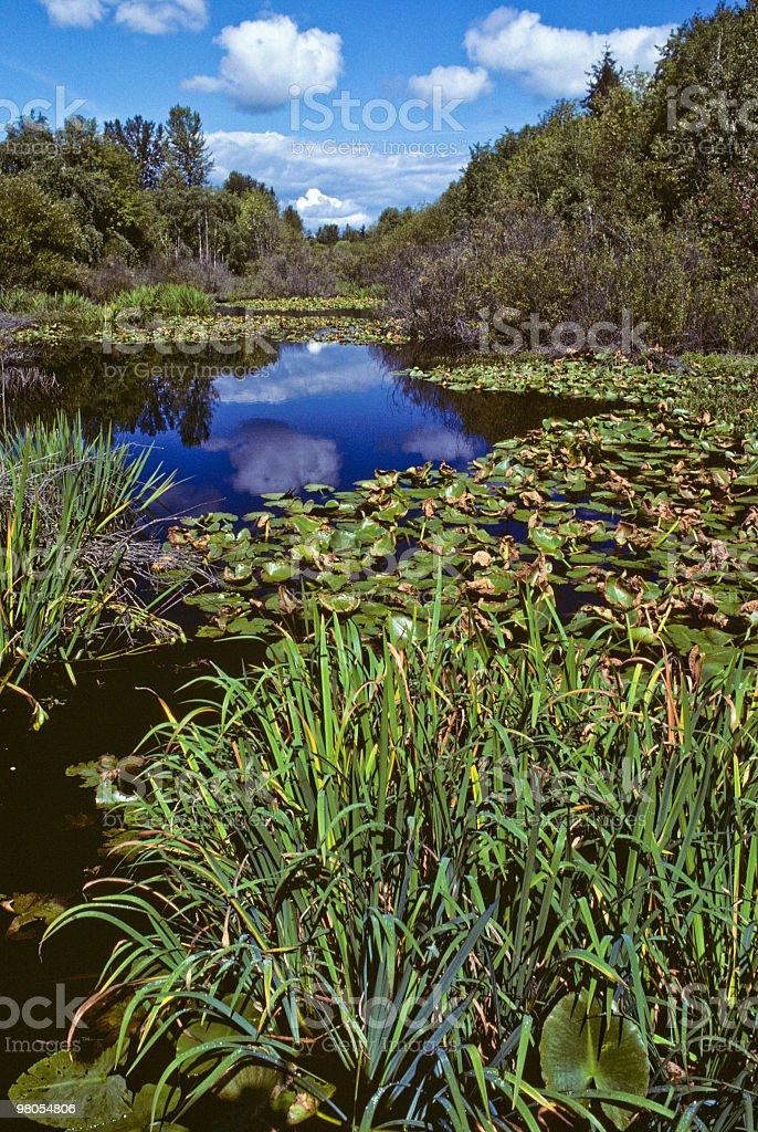 Freshwater Marsh e nuvole foto stock royalty-free