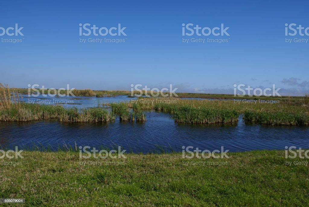 Freshwater Marsh Environment stock photo
