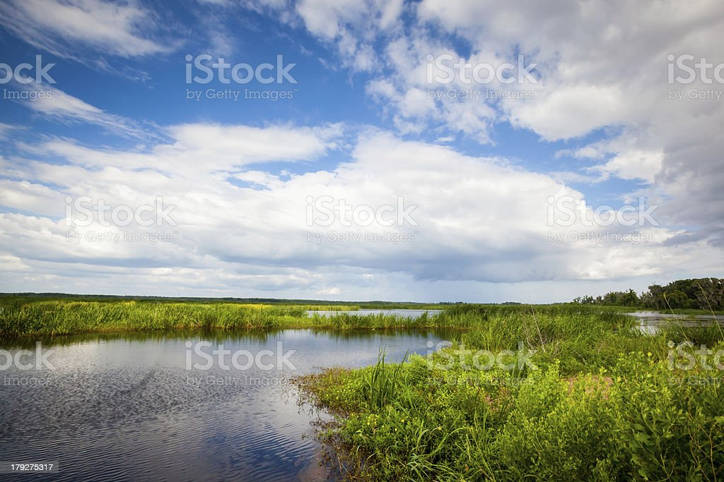 Freshwater Marsh royalty-free stock photo