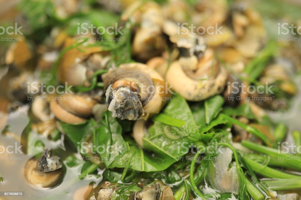 Freshwater mussel stock photo