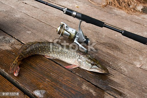 923691568istockphoto Freshwater pike and fishing equipment lies on wooden background. 916112218