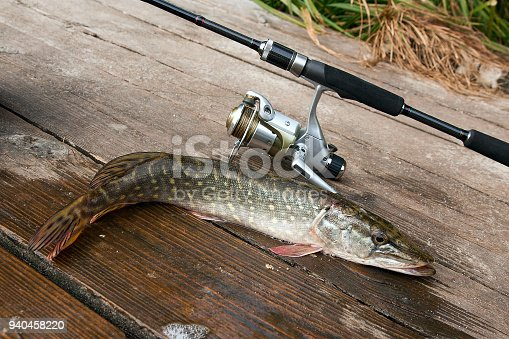 923691568istockphoto Freshwater pike and fishing equipment lies on wooden background. 940458220
