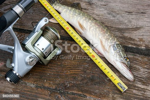 923691568istockphoto Freshwater pike fish and tape-measure on wooden background. 940455360