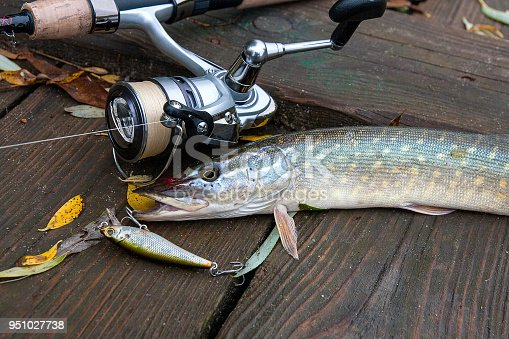 923691568istockphoto Freshwater pike with fishing bait in mouth 951027738