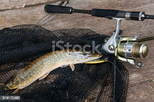 923691568istockphoto Freshwater pike with fishing lure in mouth and fishing equipmen 916112490