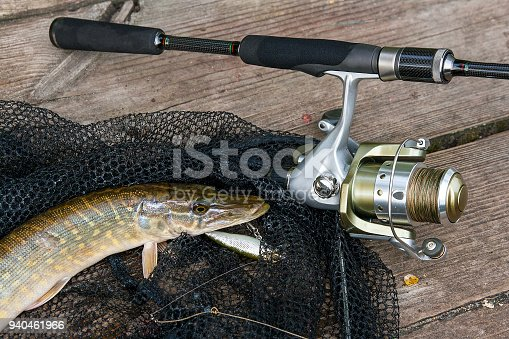 923691568istockphoto Freshwater pike with fishing lure in mouth 940461966