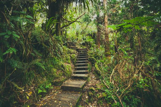 Fôret de Bélouve Wandern Weg, La Réunion, Maskarenen – Foto