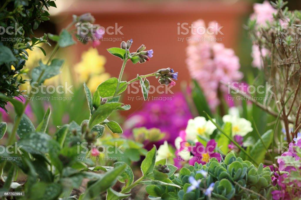 Frühjahrsblumen stock photo