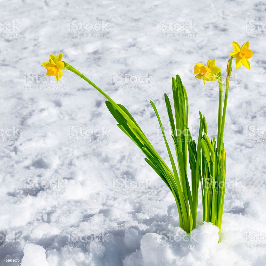 Frühlingsgruß stock photo