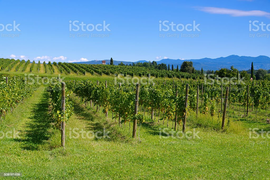 Friaul vineyards in summer stock photo