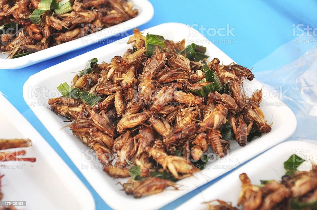fried bugs for dessert locust cockroach insects royalty-free stock photo