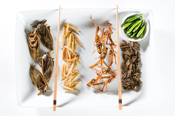 fried bugs - insect stock pictures, royalty-free photos & images