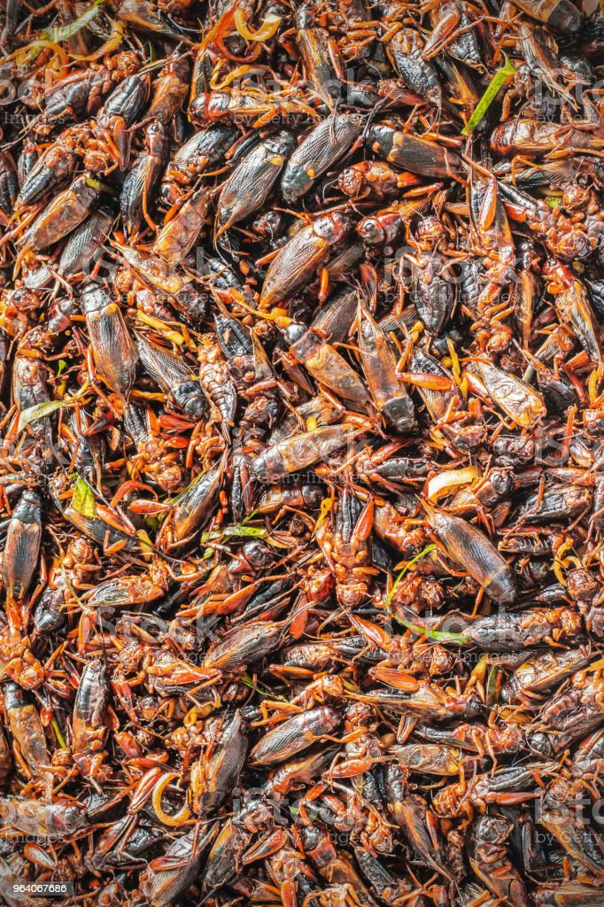 Fried crickets with background - Royalty-free Asia Stock Photo