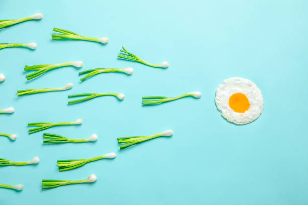 fried egg and scallions, fertilization fried egg and scallions, fertilization sperm stock pictures, royalty-free photos & images