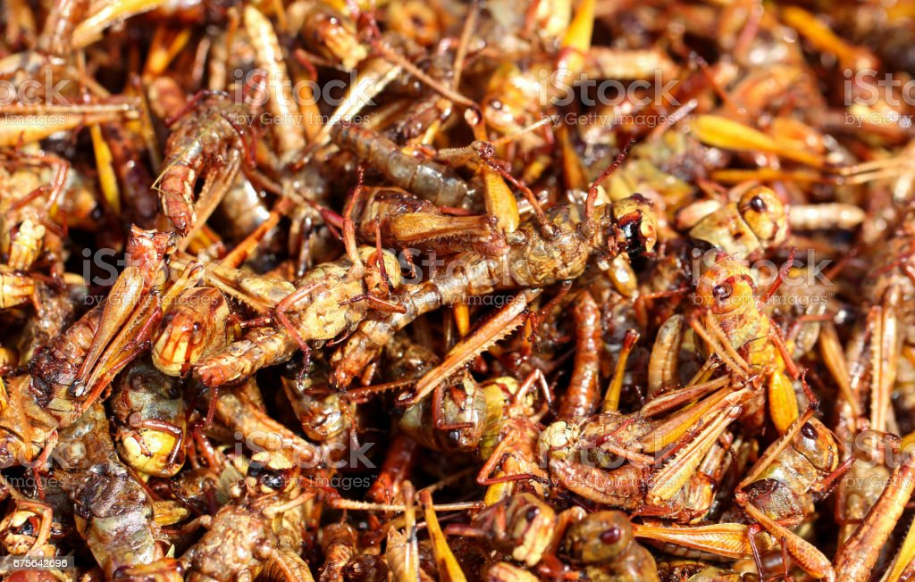 fried insect royalty-free stock photo