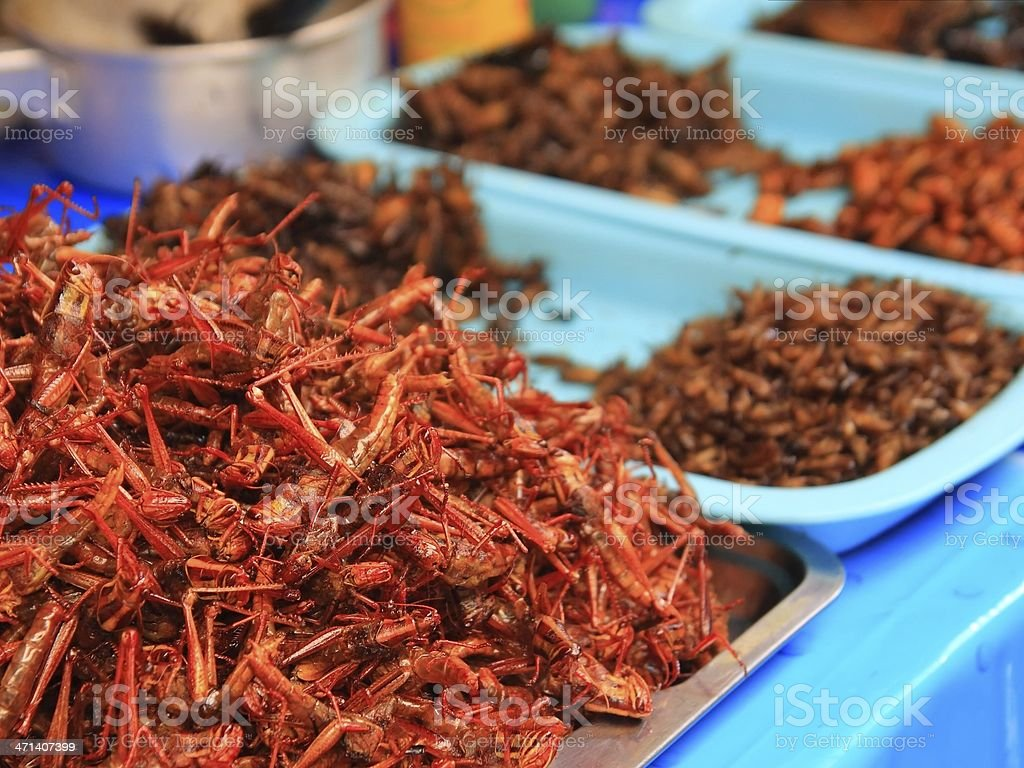 Fried insects royalty-free stock photo
