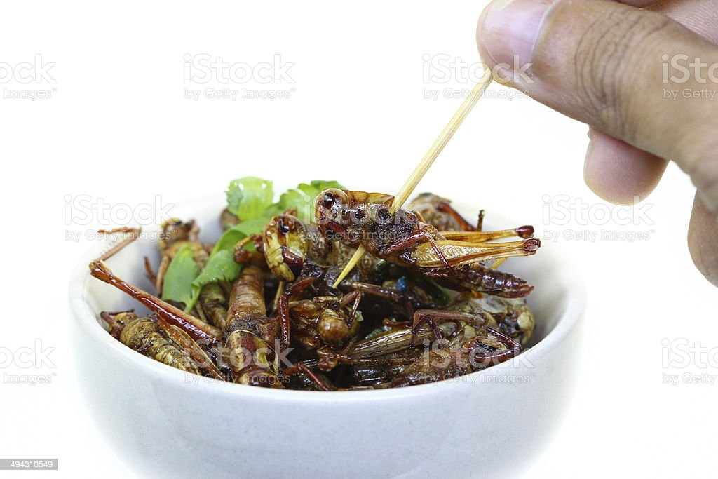 Fried insects. stock photo