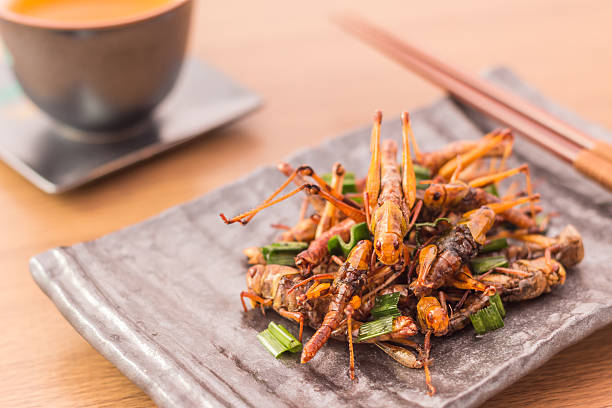 fried insects - insect stock pictures, royalty-free photos & images