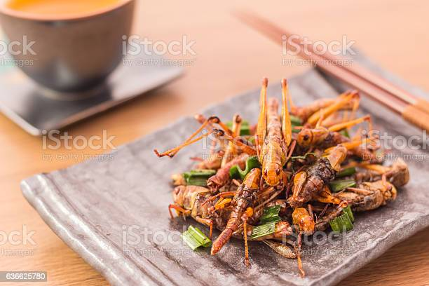 Photo of Fried insects