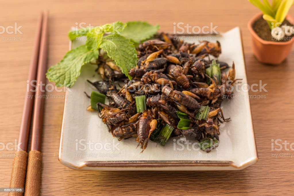 Fried insects stock photo