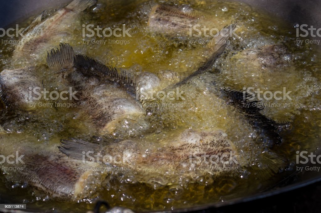 Fried Trichogaster pectoralis in large pan stock photo