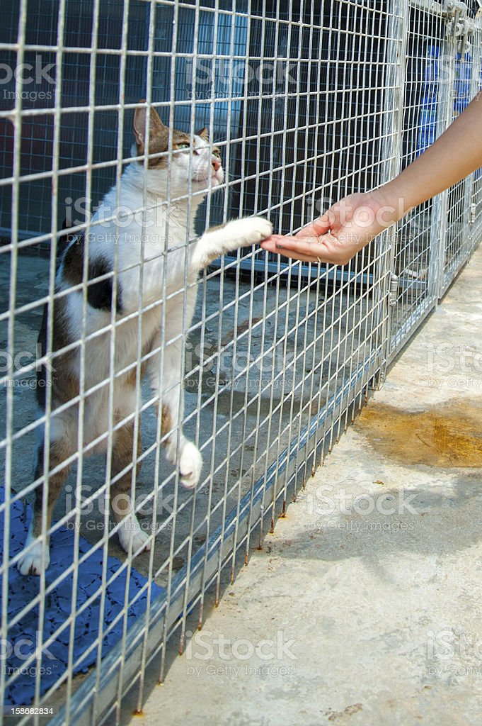 Animal shelter cats in Singapore shaking hands.