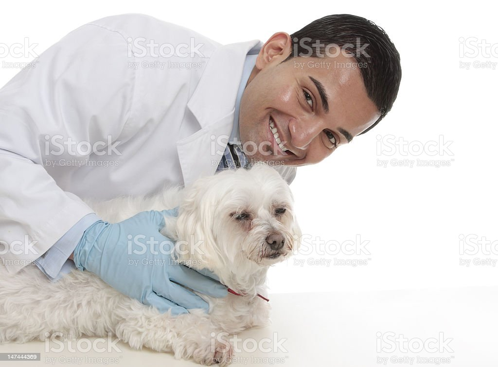 Friendly caring vet with a sick animal royalty-free stock photo