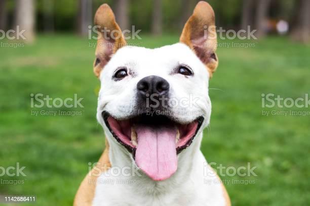 Friendly dog having a big smile picture id1142686411?b=1&k=6&m=1142686411&s=612x612&h=uy vb4tc2q8s2xguw4eyf ms2kvmrzudiofbbdi8xkw=